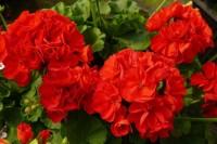 Фэн-шуй: Комнатные растения для дома